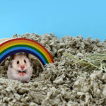 Best Hamster Bedding of 2019 Review
