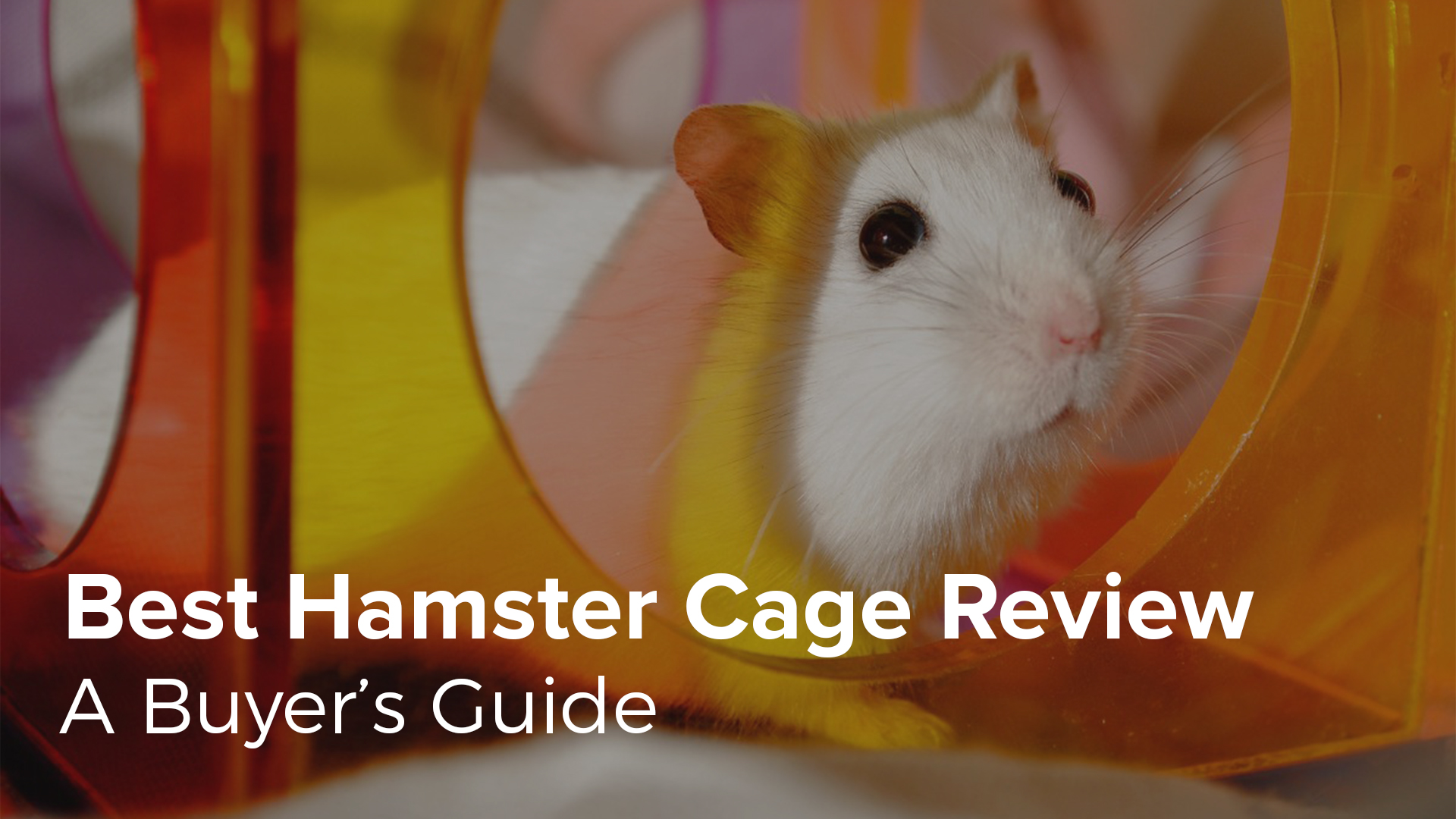 Best Hamster Cage Review